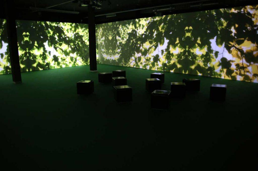 Biblioteca Degli Alberi – Video Installazione